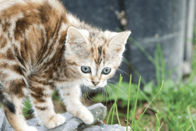 Big Valley cats need tags after council tweaks animal control bylaw