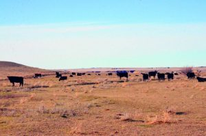 Forget the heat, it's the drought causing concern