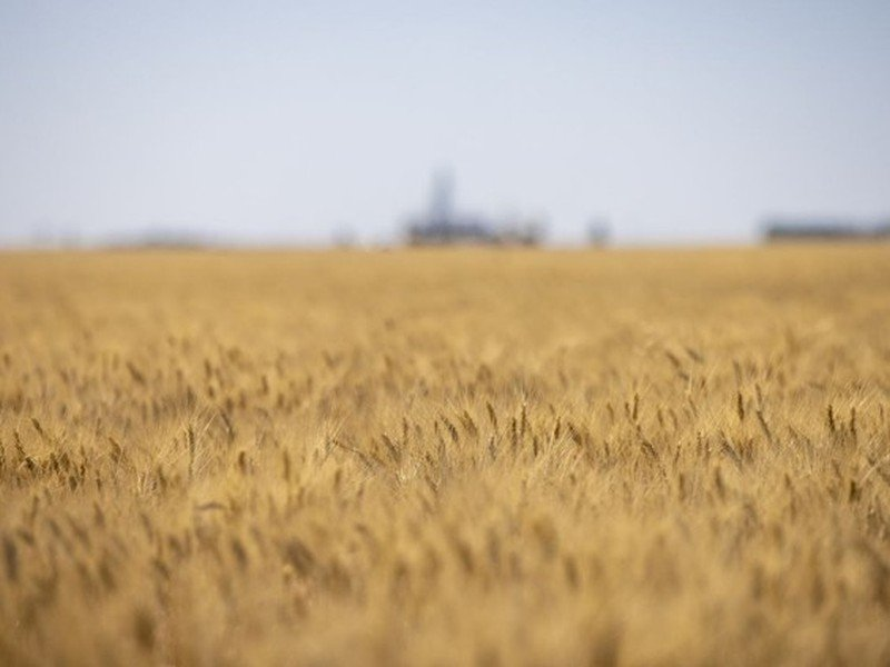 'A different mindset': Sask. farmers look to the future after months of drought
