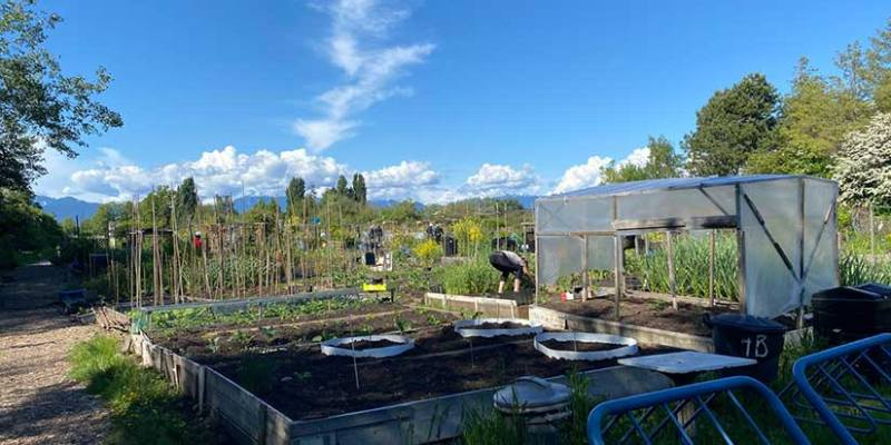 City planning more community gardens