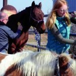 Equine therapy group hosts event specifically for seniors