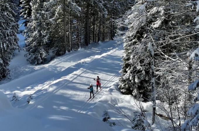 Tree logging beside Apex Loop has left Nelson Nordic Ski Club with loss of part of the loop